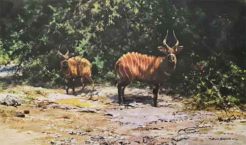 david shepherd antelope prints