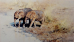david shepherd african babies elephants, signed, limited edition, print