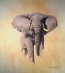 david shepherd African bull elephant elephants , signed, limited edition, print