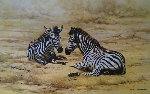 david shepherd zebra prints