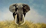 david shepherd ahmed, elephant print