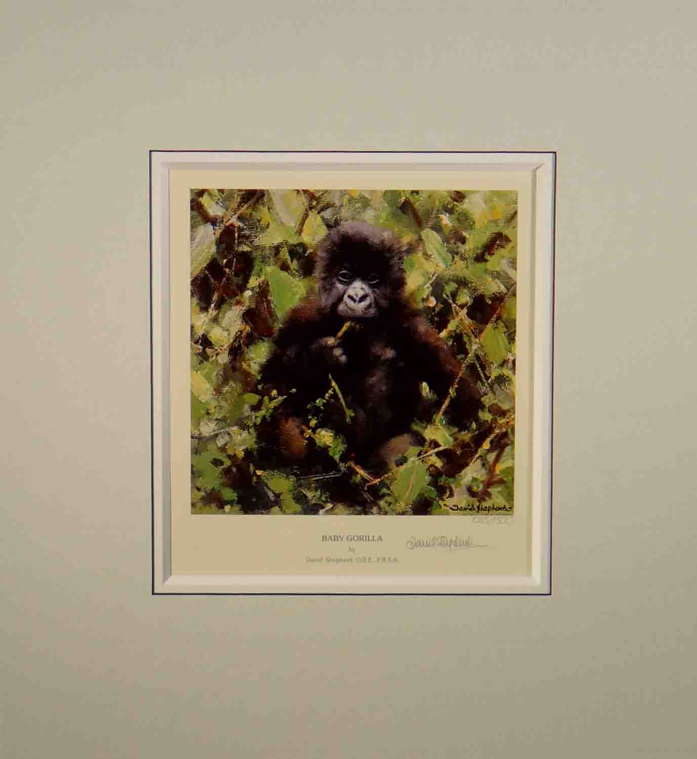 david shepherd, baby Gorilla, signed, limited edition, print