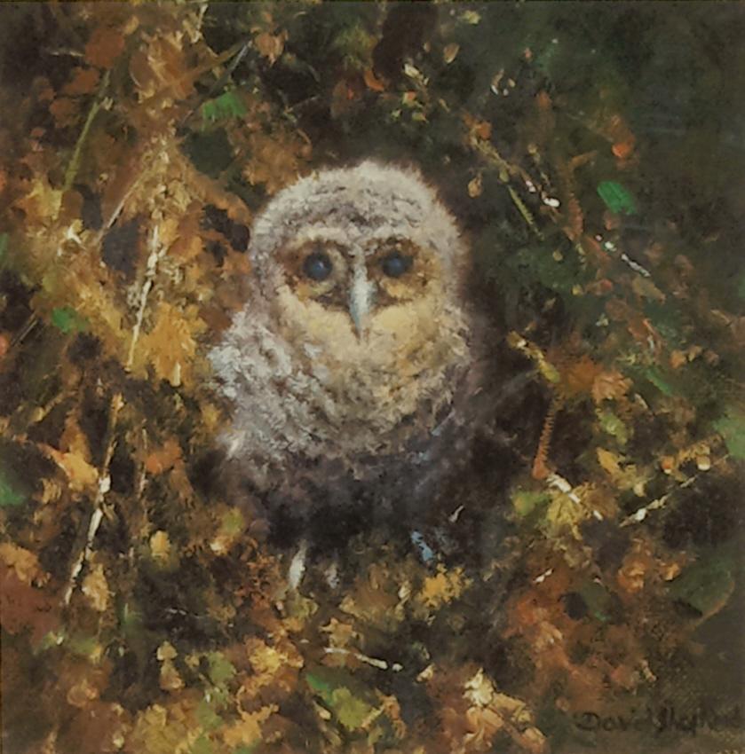 shepherd baby tawny owl