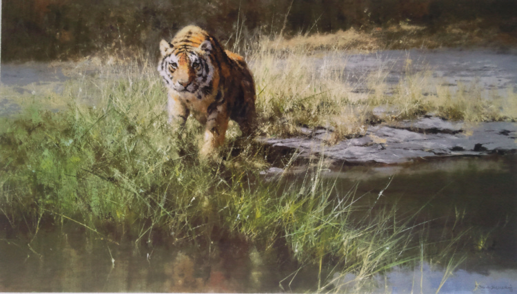 david shepherd bandipur tiger print