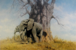 david shepherd baobab and friends elephants, signed, limited edition, print