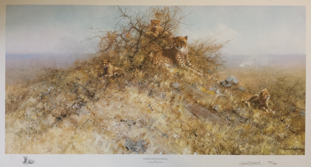 signed limited edition print Cheetahs, best spots on the hill