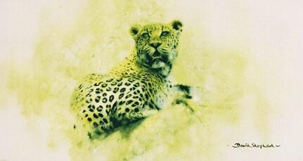 bfleopard