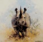 david shepherd rhinos prints