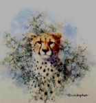 david shepherd cheetah cameo print