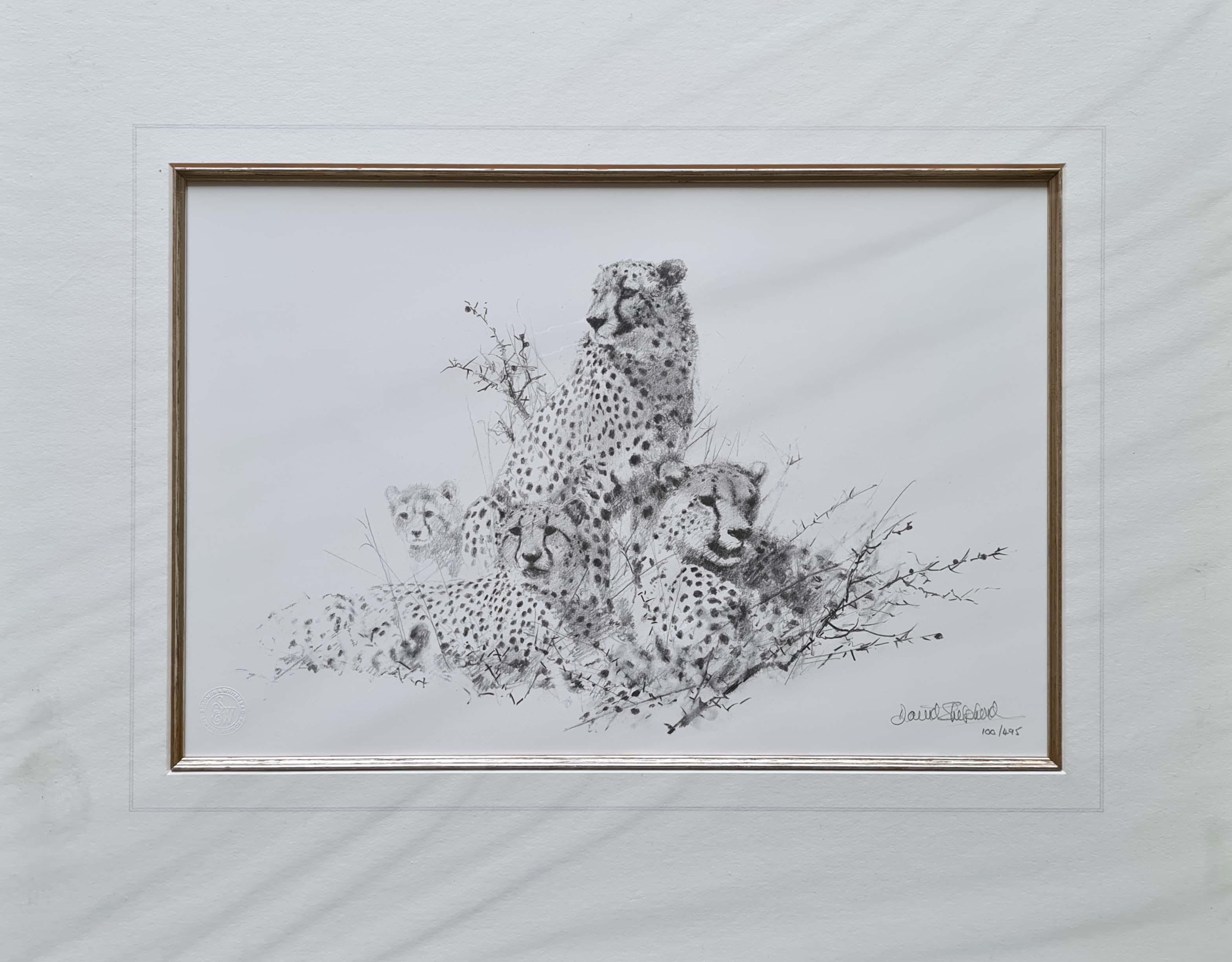 david shepherd  cheetah pencil 1999