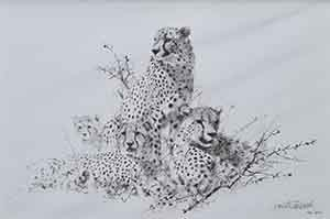 david shepherd cheetah pencil drawing 1999 print