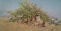 davidshepherd-cheetahfamily