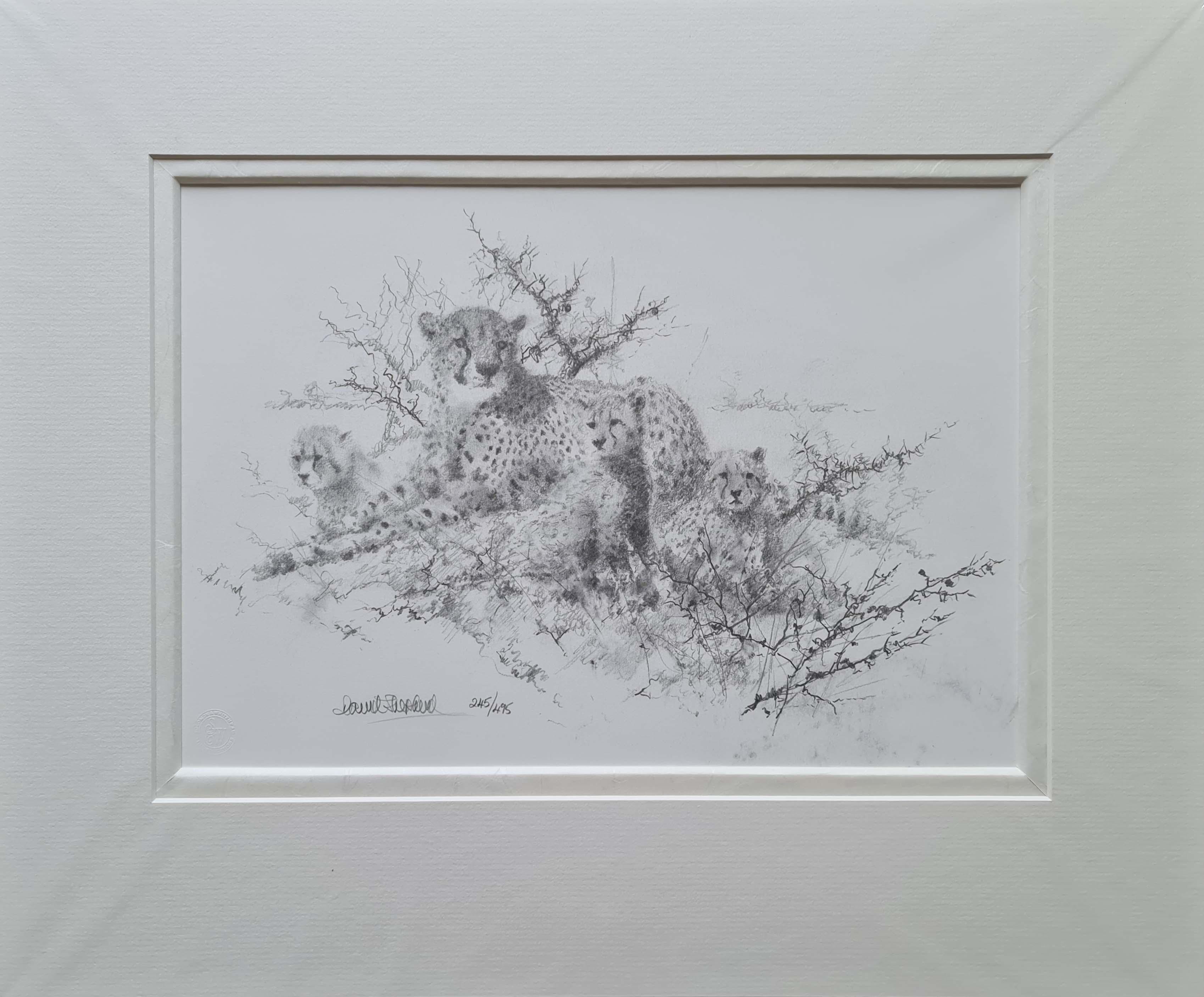 cheetahs drawing