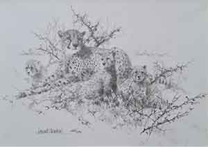 david shepherd cheetahs drawing