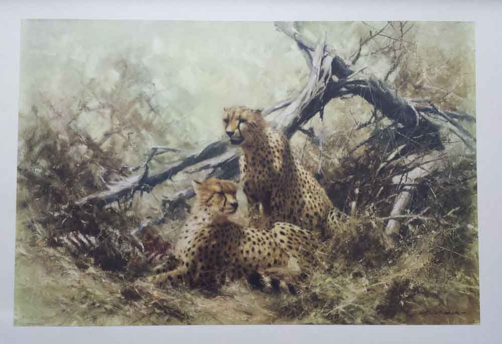 david shepherd  cheetahs 1967 print