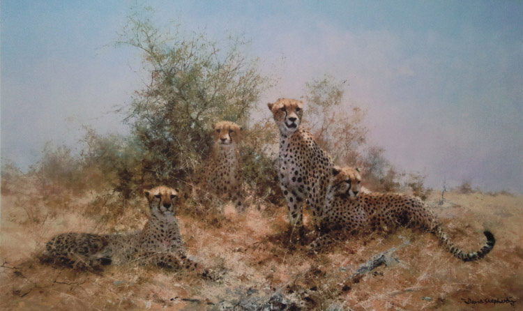 signed limited edition print Cheetahs, silkscreen