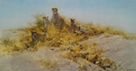 david shepherd cheetahs of namibia print