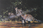david shepherd, clouded leopard and cubs, print