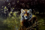 david shepherd cool tiger