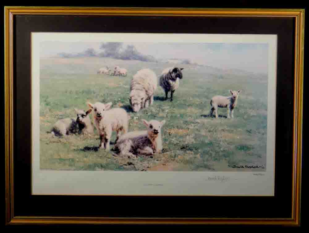 david shepherd, Country cousins, sheep, lambs, signed print