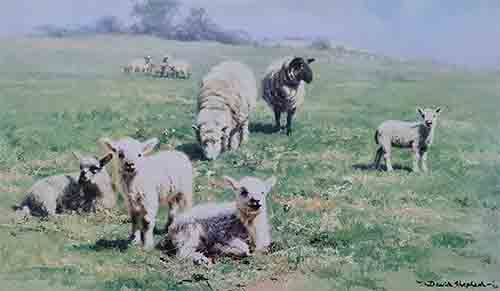 david shepherd lambs sheep print