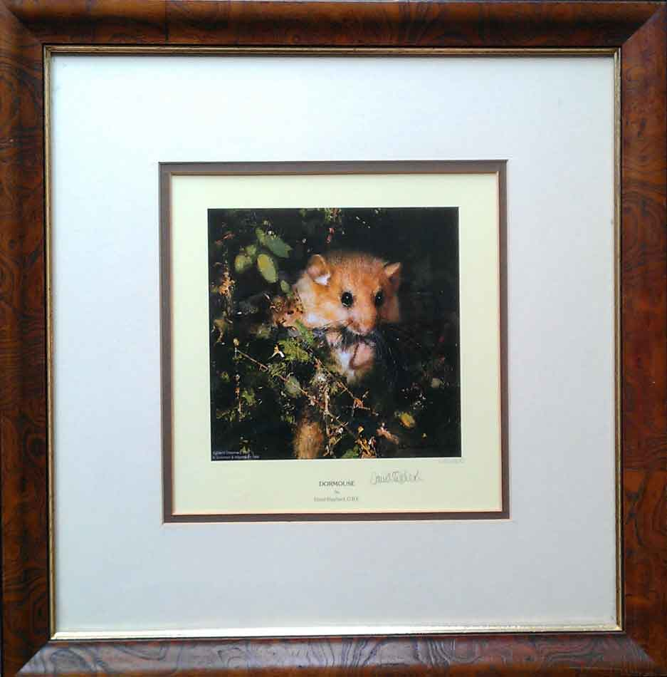 david shepherd,Dormouse, print