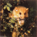 david shepherd dormouse print