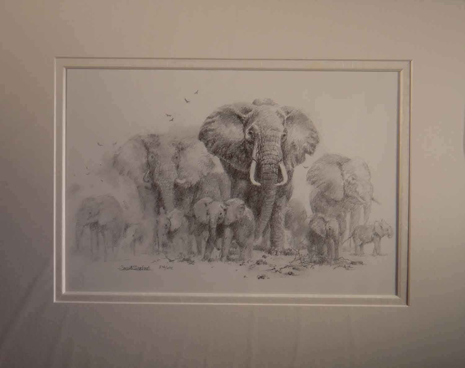 david shepherd, elephants pencil, sketch, drawing