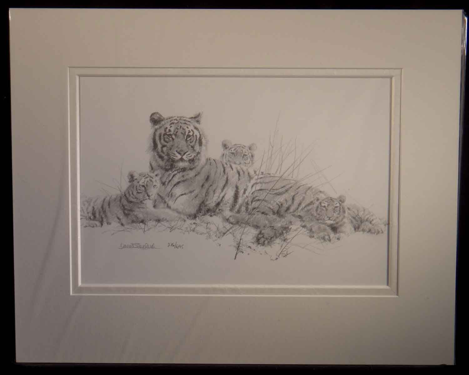 david shepherd, tigers, pencil, sketch, drawing