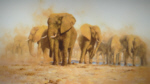 david shepherd Dusty Evening silkscreen elephants print