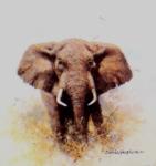 david shepherd elephant cameo elephants print