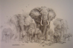 david shepherd, sketch, drawing elephants print