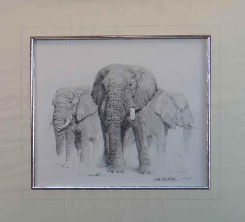david shepherd  elephant pencil 1998