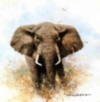 david shepherd elephant cameoelephants print