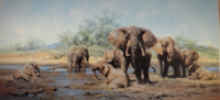 david shepherd elephant heaven elephants, signed, limited edition, print