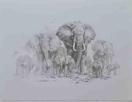 david shepherd, sketch, drawing elephants print