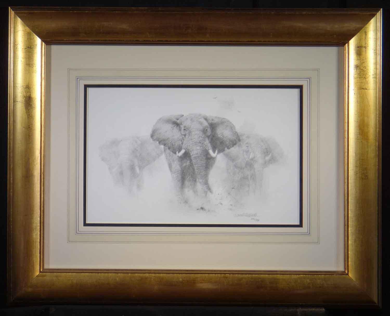 david shepherd, elephants pencil, sketch, drawing