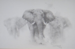 david shepherd elephant signed elephants pencil drawing print