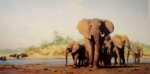 david shepherd Evening in Africa elephants, signed, limited edition, print