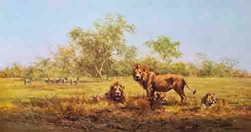 david shepherd evening in the luangwa lions print
