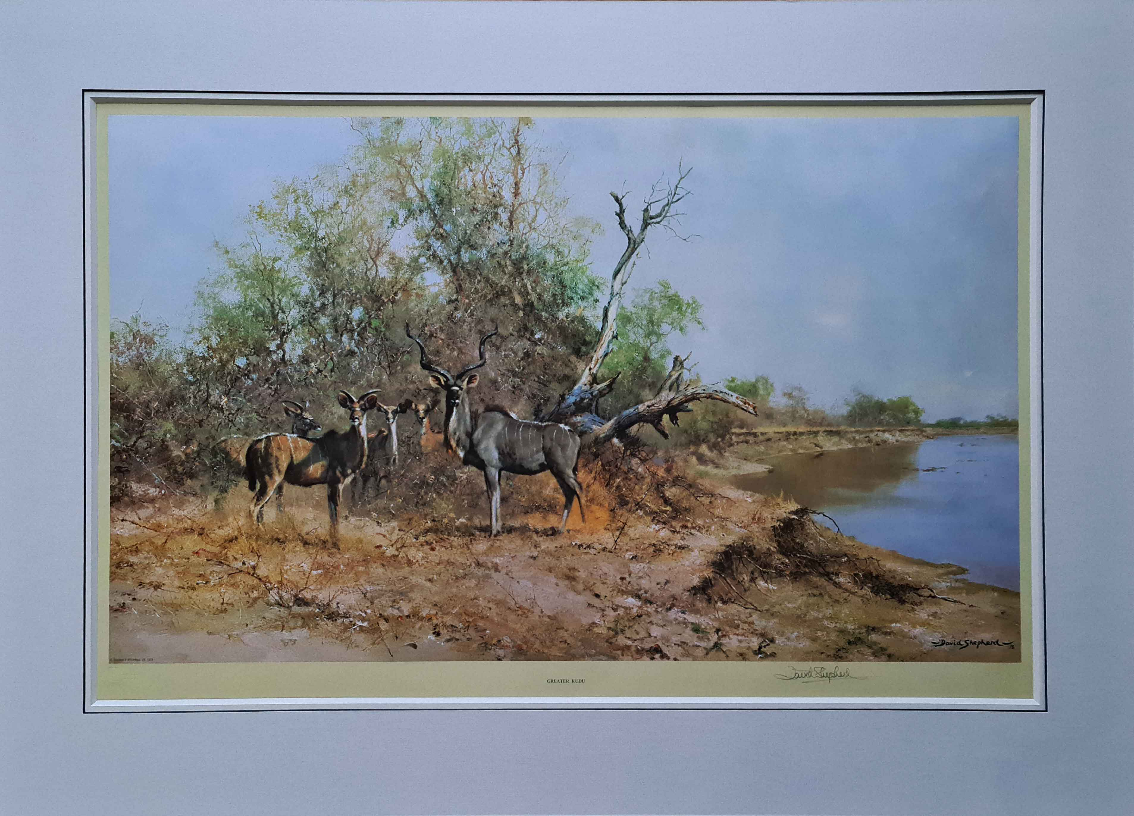 shepherd greater kudu signed print