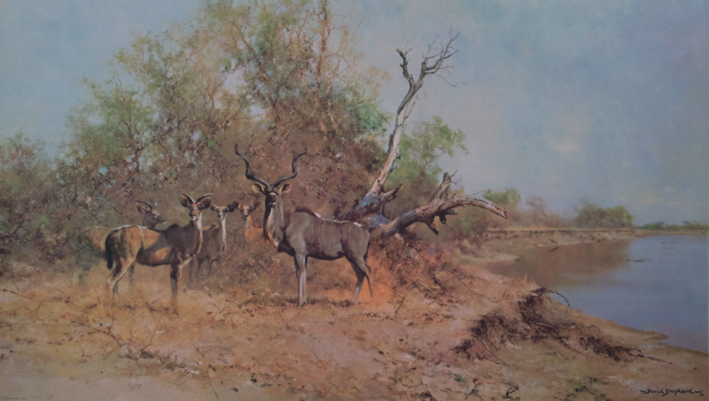 shepherd greater kudu signed print