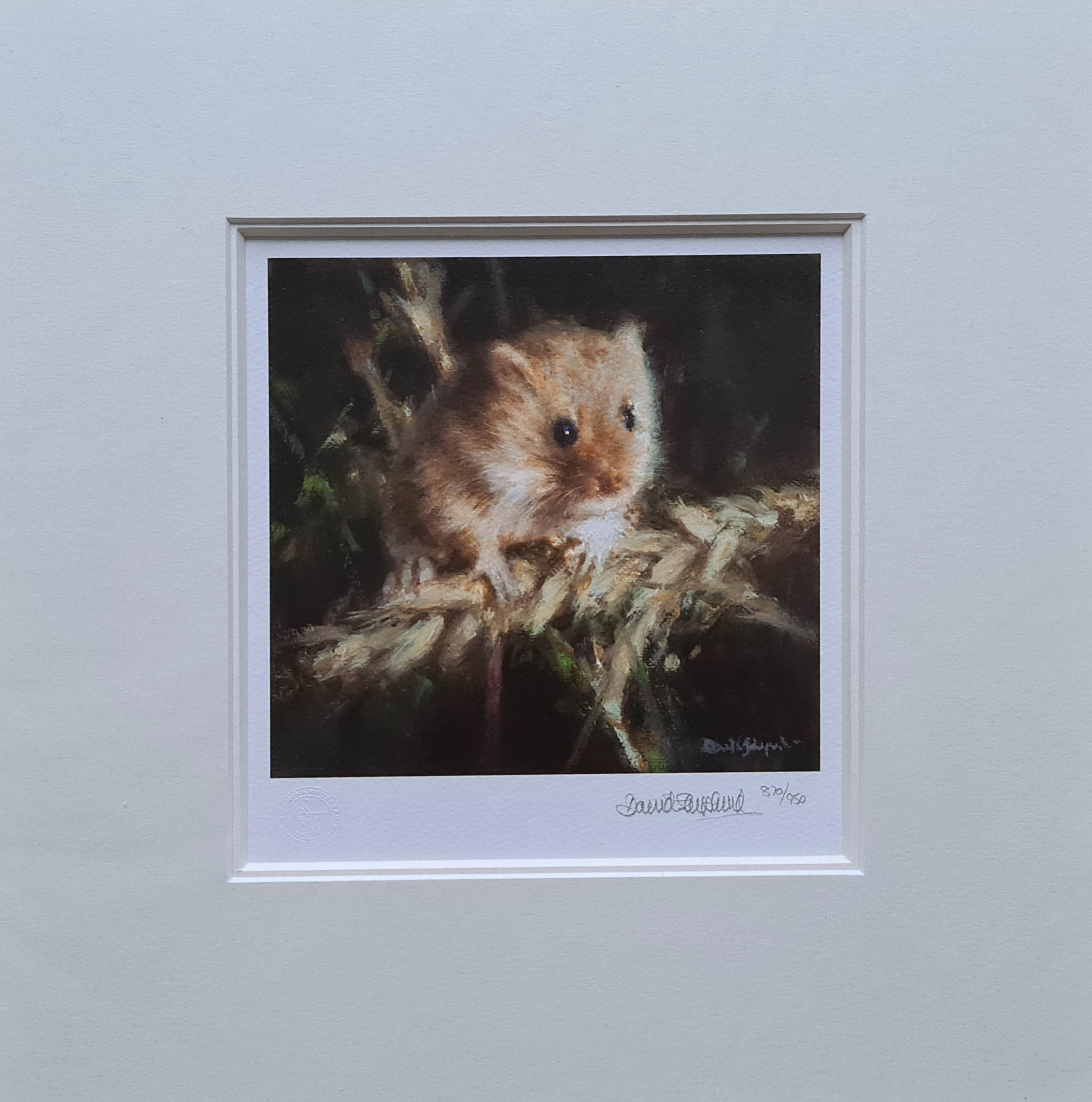 davidshepherd harvest mouse mounted
