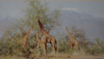 david shepherd giraffes prints