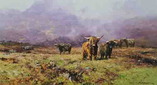 davidshepherd-highlandcattle