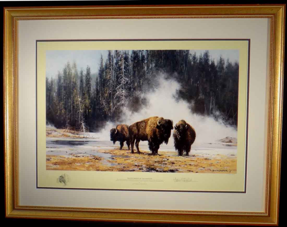 david shepherd, Bison, hotsprings of Yellowstone