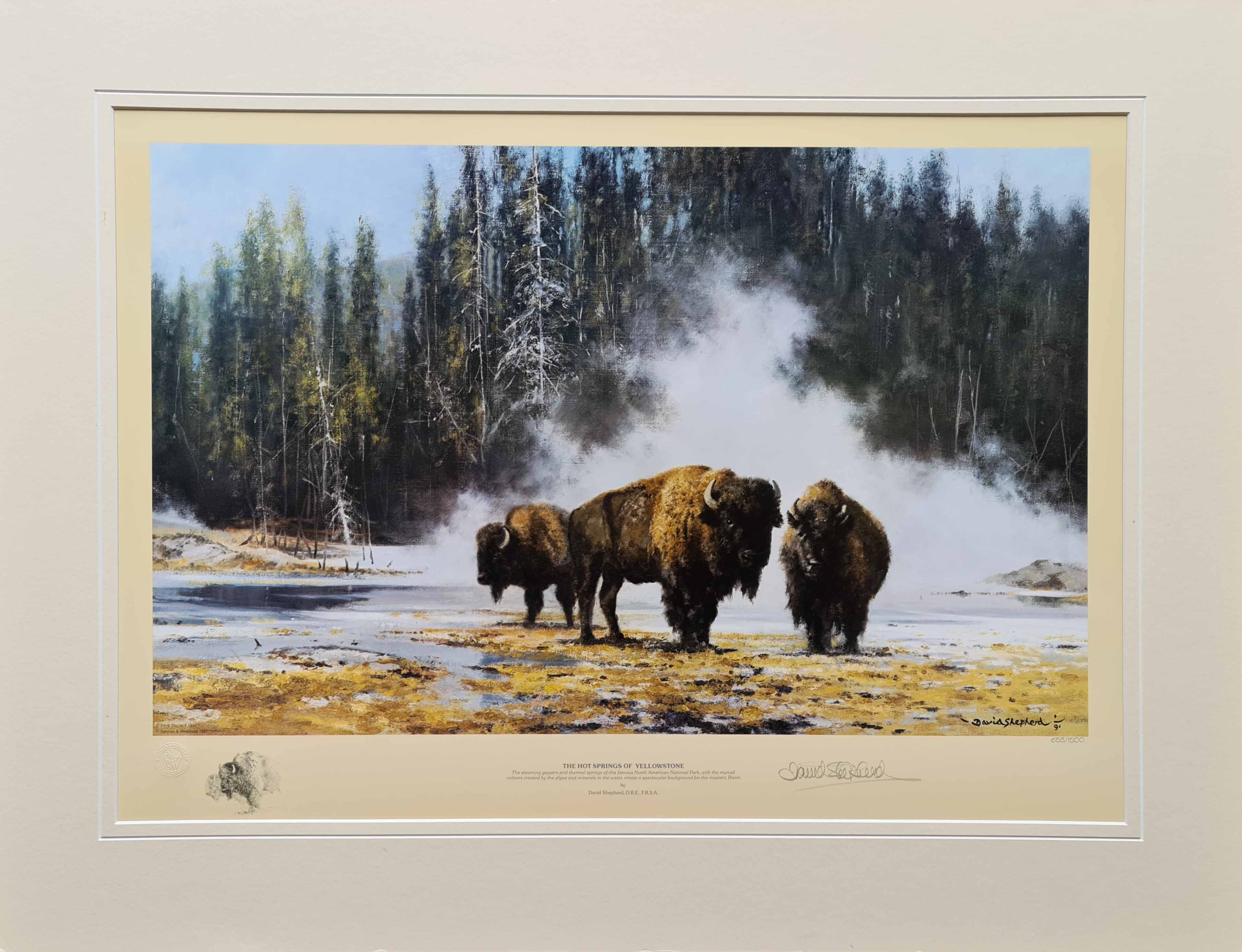 david shepherd, Bison, hotsprings of Yellowstone