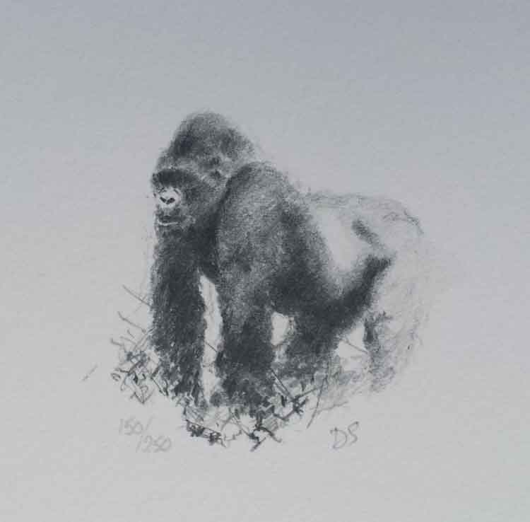 david shepherd in the mists of Rwanda, gorillas sketch, print