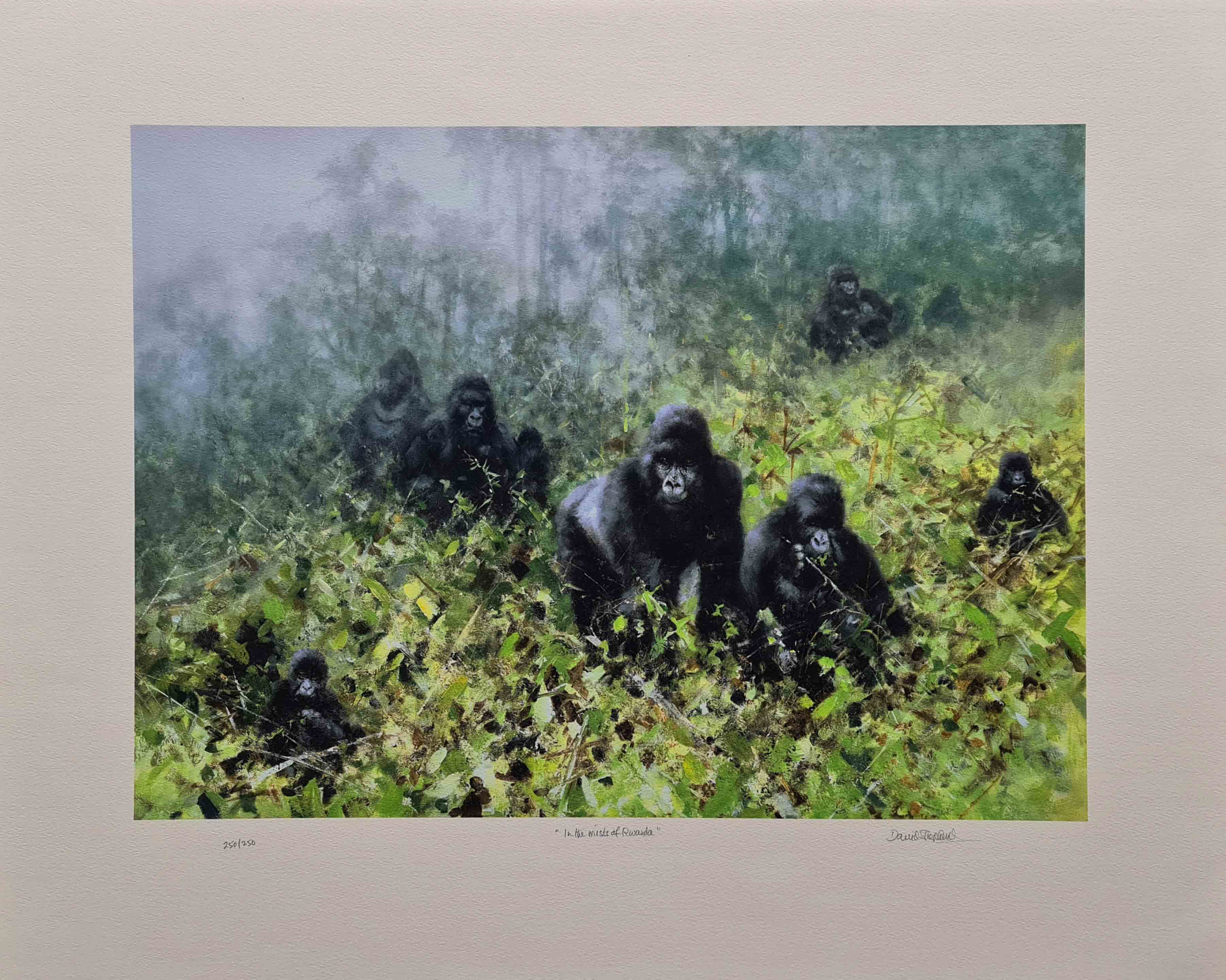 david shepherd in the mists of Rwanda, gorillas print