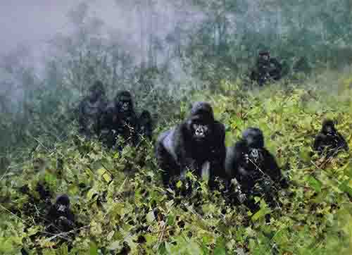 david shepherd in the mists of Rwanda silkscreen gorillas print